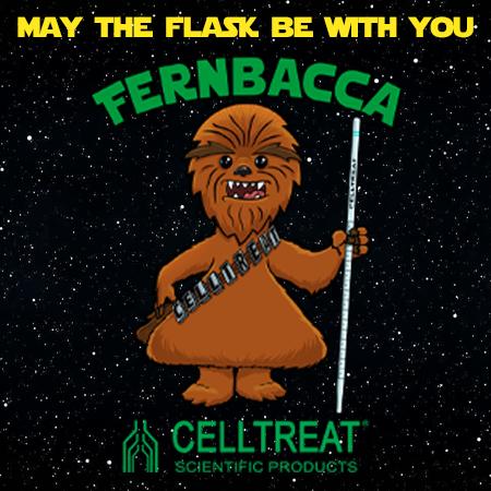 promotion image fernbacca dec 2019
